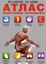 Атлас анатомия человека Книга Самусев Рудольф 12+