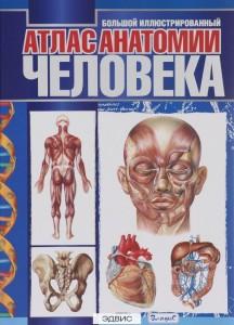 Большой иллюстрированный атлас анатомии человека Книга Спивак  А 12+