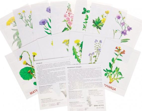 Цветы полевые 16 картинок А2 Дидактические материалы Цветкова ТВ 0+